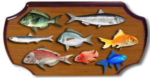 Here's why focusing on multiple fish is a good approach for your small business.